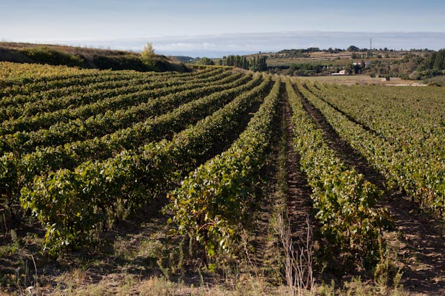 Vineyards of Minervois in the Languedoc
